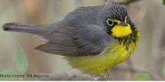 Change Glass, Save Birds