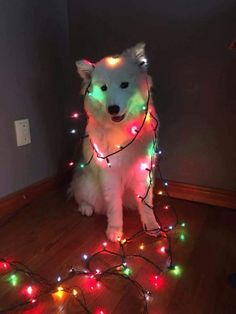 Dog sz Dog Tumblr, Tumblr Perro, Cute Baby Animals, Cute Funny Animals, Funny Animal Pictures, Funny Dogs, Animals And Pets, Too Cute, Christmas Puppy