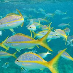 Snorkeling in the Bahamas!