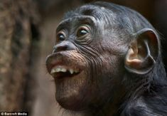 Gawker: A chimp is captured looking startled as part of photographer Volker Gutgessell's four-year project