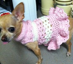 Crochet dog dress. Daisy won't like the skirt, she is a bit of a wiggle worm and not foofy.