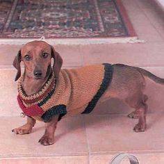 Kleurryke keuses Rugs, Animals, Craft Work, Farmhouse Rugs, Animales, Animaux, Animal, Animais, Rug