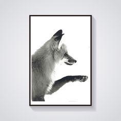 photographie d'un renard animal sauvage nature fourrure wild : Décorations murales par impressive