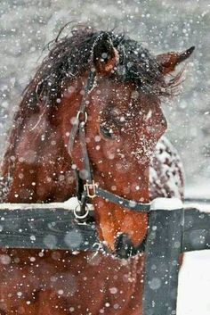 Get in the barn Chestnut its cold outside...