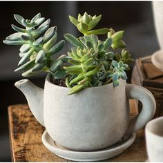 We'd like to share some cool ideas of unique planters for spring, this is repurposing tea tableware for pots. Small Succulents, Succulents Garden, Metal Wall Planters, Planter Pots, Steel Planter, Vertical Planter, Outdoor Planters, Cactus Flower, Flower Pots