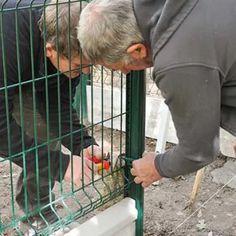 Solidariser les panneaux rigides grillagés aux poteaux. Parrot, Dogs, Animales, Plott Hound, Rat Dog, Animal Protection, Parrot Bird, Pet Dogs