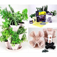@Overstock - Tea enthusiasts will rejoice with this tea herb garden starter kit. This kit includes everything you need to grow a mini tea herb garden, such as a wide array of seeds and pellets, planter, mini greenhouse, and instructions for getting started.http://www.overstock.com/Home-Garden/Indoor-Herbal-Tea-Herb-Garden-Starter-Kit/4433756/product.html?CID=214117 $69.99