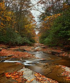 This is Camp Creek in Camp Creek State Park, West Virginia.