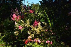 Ilta-aurinkoa puutarhaan