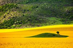 exPress-o: Colour Me Yellow