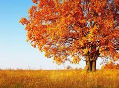 Eikenboom, symbool van kracht, moed en rechtschapenheid De eik is een boom die beladen is met symboliek. Een eik wordt behoorlijk groot, kan bijzonder oud worden en blijft eeuwenlang fier overeind staan. Een eik kan gemakkelijk 600 jaar worden, maar er zijn gevallen bekend ...