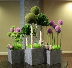 """The Park"" Fantasy ""trees"" of allium, green dianthus, pittosporum & moss orbs cast shade upon a wheat grass ""lawn"". Boarder plantings of artichokes and dusty miller complete the industrial chic look."