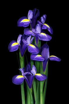 Blue And Purple Flowers, Beautiful Flowers, Flowers Nature, Spring Flowers, Beautiful Flower Quotes, Dame Nature, Iris Painting, Gothic Garden, Flower Wallpaper