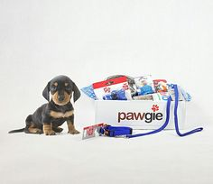 Spoil Your Four legged Friend With A Special Pawgie Box!  Now Available: Puppy Starter Box, Cat Box, Pooch Hygiene Gift Box, Pooch Treat Box, Pooch Birthday Box, Pooch Adoptaversary Box, Pooch Get Well Box, Pooch Any Occasion Gift Box.  Go To: www.pawgie.com.au