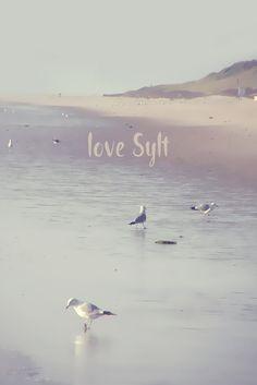 Neu in meiner Galerie bei OhMyPrints: LOVE SYLT I. #Typo #Love  #Sylt #Hörnum #Möwen #kunst #fotografie #Wattenmeer #Nordsee #PiaSchneider #ohmyprints #kunstdrucke #artprints #beach #northsea #seagulls #ocean