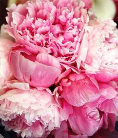 Pink Peonies | In Spaces Between