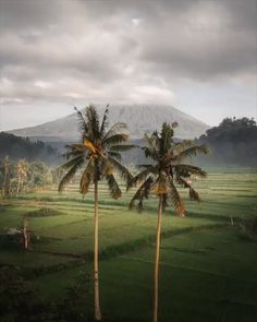10 Best Places to Visit in Indonesia - Tour To Planet Lake Pictures, Forest Pictures, Beautiful Places To Travel, Cool Places To Visit, Amazing Destinations, Travel Destinations, Gunung Leuser National Park, Amazing Nature, Nature Photos