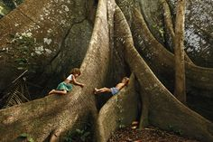 Photo: Araquém Alcântara -- Amazônia - Brazil