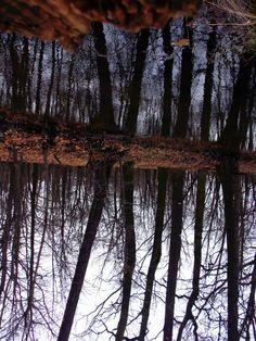 Den Wald einfach mal auf den Kopf gestellt..
