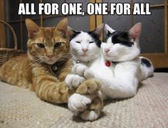 This is the best website for cute cat pictures. The greatest funny cuddly cats and kitten pictures every single day. Only Cute Cat Pictures for you to love. Funny Cats, Funny Animals, Cute Animals, Baby Animals, Crazy Cat Lady, Crazy Cats, Funny Cat Pictures, Funny Photos, Pet Photos