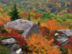 Blue Ridge Parkway Guide with Top 50 things to do near Asheville, North Carolina including mountain views, picnics, hiking, waterfalls and Parkway fall foliage. Description from tourandtravel.ga. I searched for this on bing.com/images