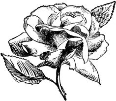 **FREE ViNTaGE DiGiTaL STaMPS**: Free Digital Stamp - Vintage Rose PNG