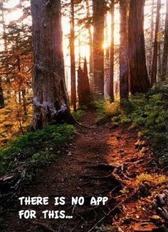 I would really love to go hiking in a gorgeous forest!