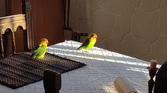 Pepito & Pepita:  taking sun peacefully. Tomando el solecillo plácidamente.