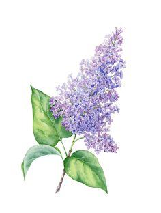 Botanical illustrations for Digital BBDO