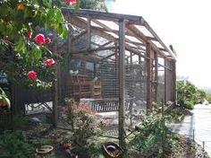 This big, beautiful aviary houses 24 rescued pigeons Pigeon House, Pigeon Loft, Big Bird Cage, Bird Cages, Bird House Kits, Bird Aviary, Terraria, All Birds, Hobby Farms