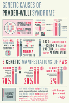 Another pinner said...I made this infographic to describe the genetic causes of Prader-Willi Syndrome.