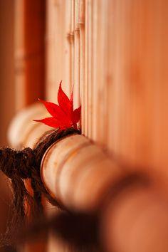 92san-photo album 京都の四季