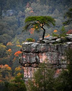 ~~Piney Creek Canyon - an overcast day at Falls Creek State Park, Tennessee by Gary Pope~~