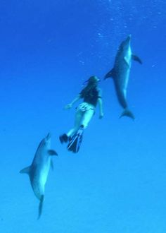 Swim with dolphins   Bimini, Bahamas   Dolphin Expeditions Photo Page