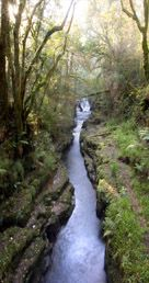 Clare Glens Forest, Limerick, County Limerick, Ireland.  Looks like a good place to find a few Fairies or a Lephrechaun.