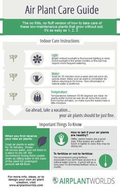 Air Plants Care | Air Plant Care Instructions