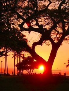 heart tree - beautiful hidden heart in nature Heart In Nature, All Nature, Amazing Nature, Nature Tree, Beautiful Nature Images, Beauty Of Nature, Romantic Nature, Amazing Sunsets, Beautiful Sunset