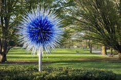 CHIHULY | Chihuly