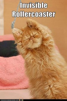 funny cat pictures - Invisible Rollercoaster