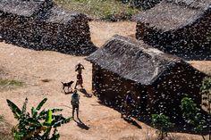 Madagascar needs more than $41 million to end locust plague