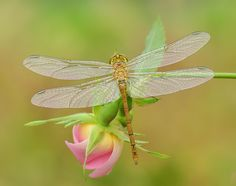 elegance of nature by mauro maione on 500px