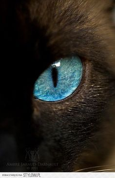 """Cats eye. Support """"Southern California Cat Adoption Tails"""" www.catadoptiontails.com"""