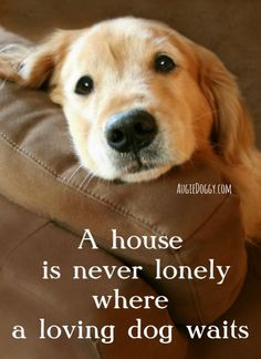 A house is never lonely where a loving dog waits. #quote