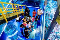 um deck de observação no topo do aquário de Dubai