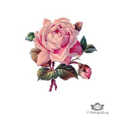 Pink Victorian Rose  Wickedly Lovely Skin Art di WickedlyLovelyArt, £3.50