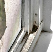 Научись быстро мыть окна с этим простым трюком!