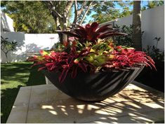 Potanico – creators of large designer garden bowls and fire pits. Feature water bowls, large garden bowl planters and big modern outdoor fire pits. Tropical Garden Design, Tropical Landscaping, Tropical Plants, Container Plants, Container Gardening, Front Door Plants, Outdoor Pots, Outdoor Ideas, Garden Pots