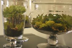 Faux Succulents in jars