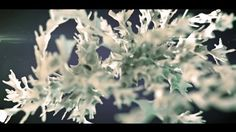 mike batchelor's Videos on Vimeo