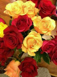 Roses 🌹 so gorgeous Love Flowers, Beautiful Flowers, Birds, Landscape, Plants, Beauty, Roses, Board, Scenery